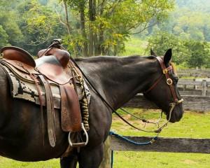 horse-176990_1280
