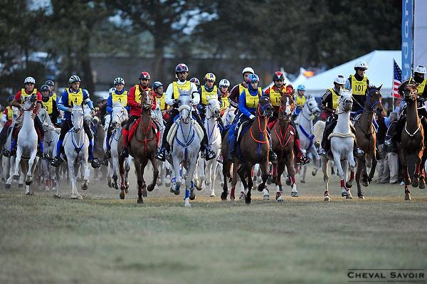 Crédit photo : http://www.cheval-savoir.com/